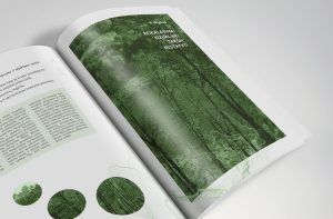 Naujausioje mokslo studijoje: kaip apskaičiuoti aplinkai padarytos žalos dydį?